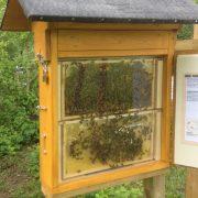 Bruchseebienen Schaukasten